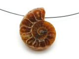 Ammonite Pendant 28mm (AM601)