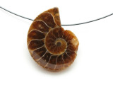 Ammonite Pendant 29mm (AM602)