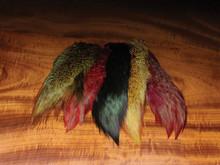 Ringneck Pheasant Rump Patch