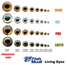 Flymen Fish Skull Living Eyes