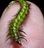 Deer Creek Diamond Flex UV Resin- Flexible (Markus Hoffmans Overworked Caddis Larva)