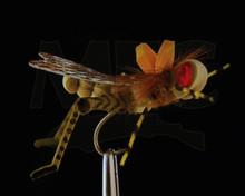 MFC Dunnigan's Young Grasshoppa