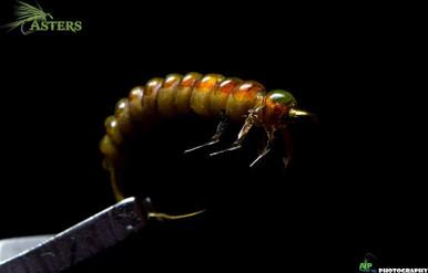Hise's Anabolic Rhyacophila Caddis Larva