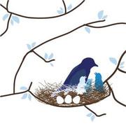 Avalisa Bird Nest