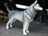 Siberian Husky - Fall / Winter Clearance