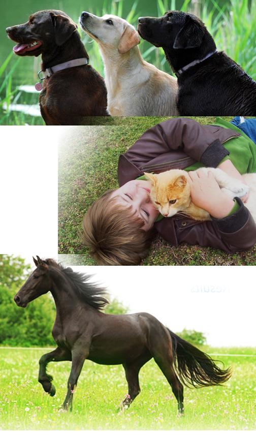 det-dog-cat-horse.jpg