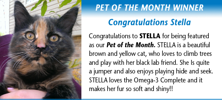 pet-month-stella1.jpg