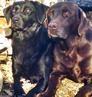 robert dogs