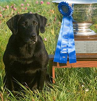 trophy-lab