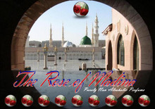 Rose of Madinah 12cc