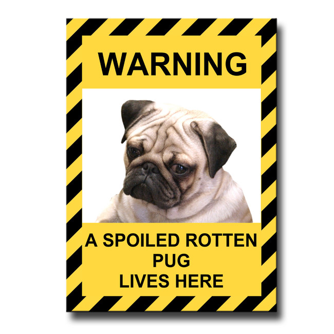 Pug Spoiled Rotten Fridge Magnet (Fawn) No 1