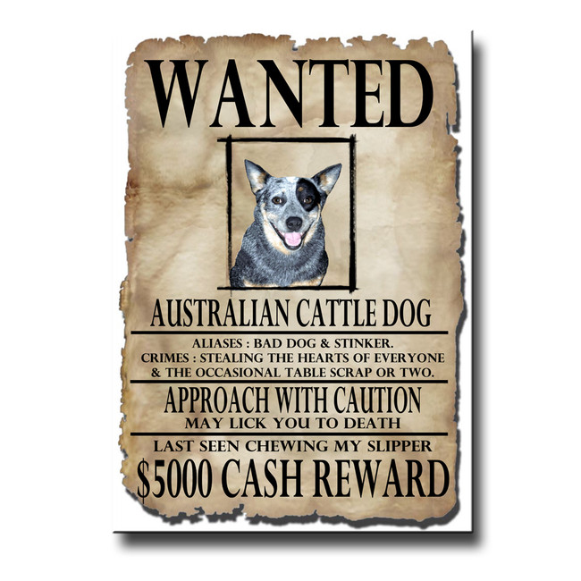 Australian Cattle Dog Wanted Poster Fridge Magnet