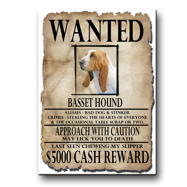 Basset Hound Wanted Poster Fridge Magnet No 1