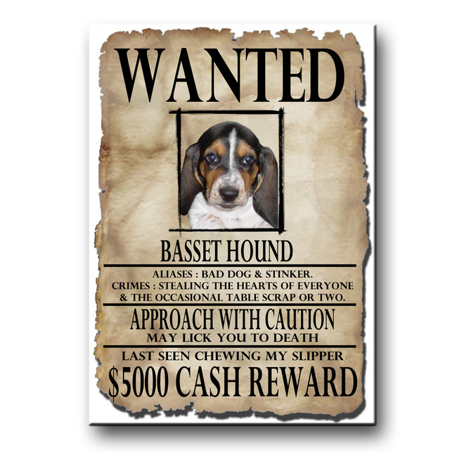 Basset Hound Wanted Poster Fridge Magnet No 2