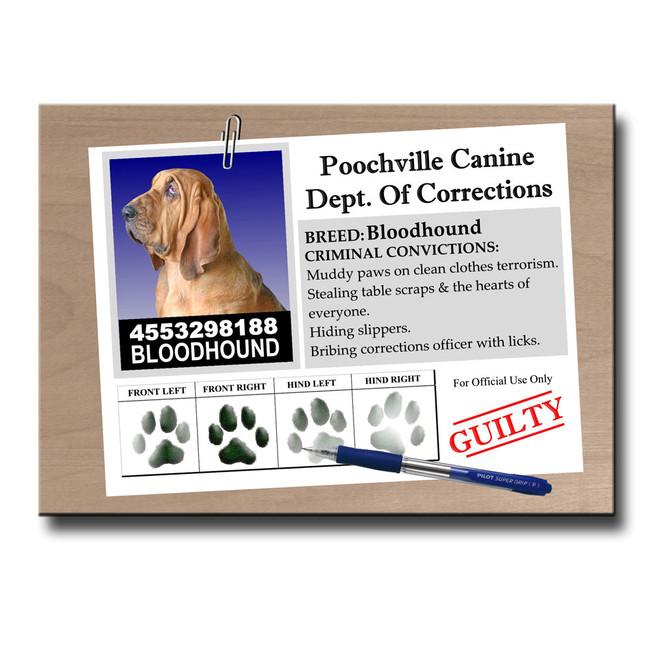 Bloodhound Rap Sheet Fridge Magnet
