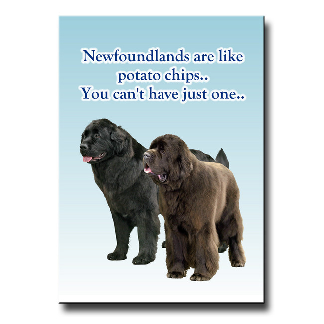Newfoundland Can't Have Just One Fridge Magnet