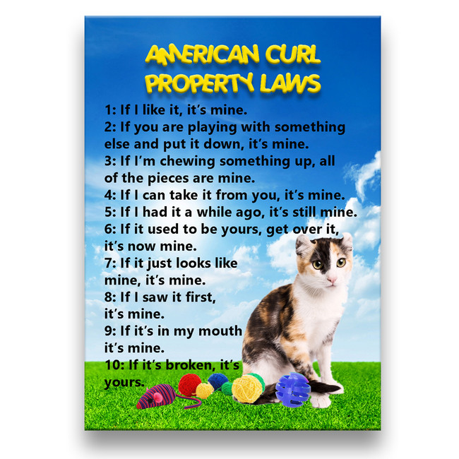 American Curl Cat Property Laws Fridge Magnet No 1