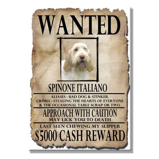 Italian Spinone Wanted Poster Fridge Magnet No 1