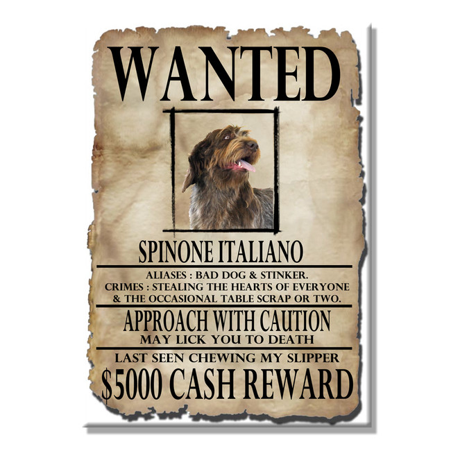 Italian Spinone Wanted Poster Fridge Magnet No 2