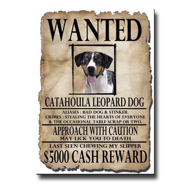 Catahoula Leopard Wanted Poster Fridge Magnet