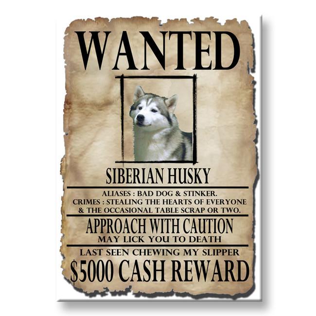 Siberian Husky Wanted Poster Fridge Magnet No 1
