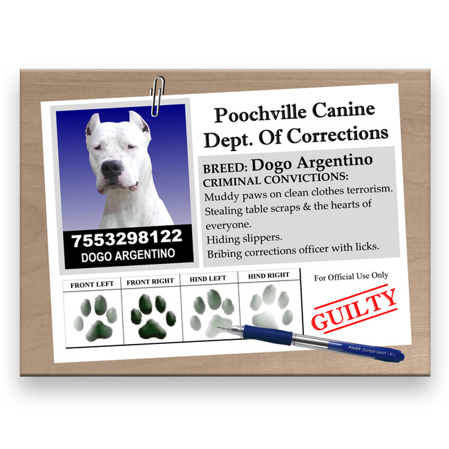 Dogo Argentino Rap Sheet Fridge Magnet