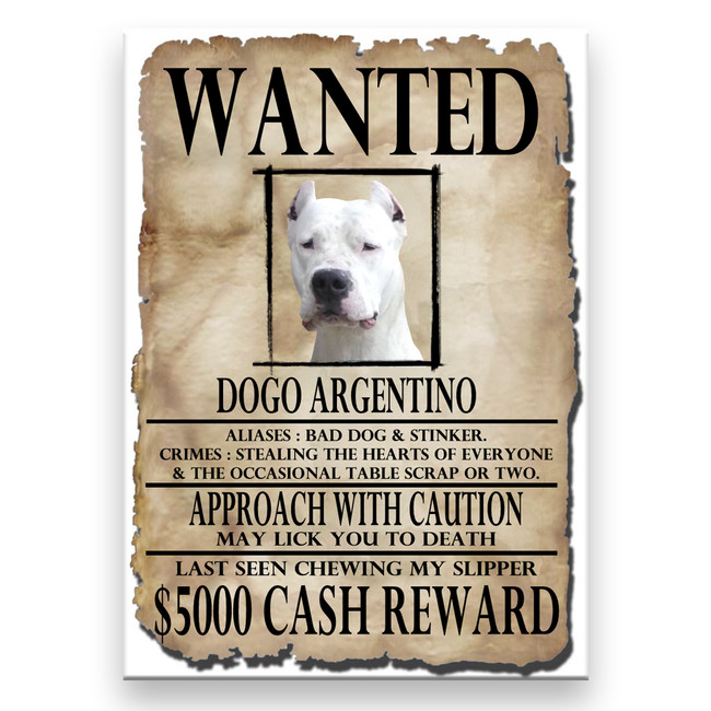 Dogo Argentino Wanted Poster Fridge Magnet