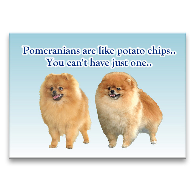 Pomeranian Can't Have Just One Fridge Magnet