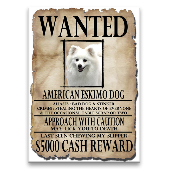 American Eskimo Dog Wanted Poster Fridge Magnet
