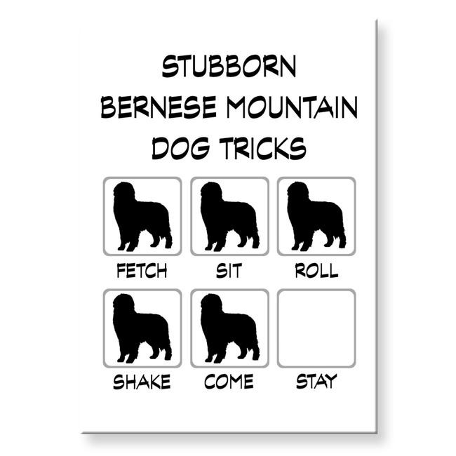 Bernese Mountain Dog Stubborn Tricks Fridge Magnet