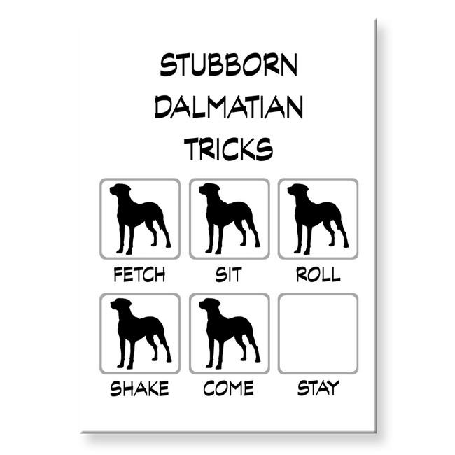 Dalmatian Stubborn Tricks Fridge Magnet