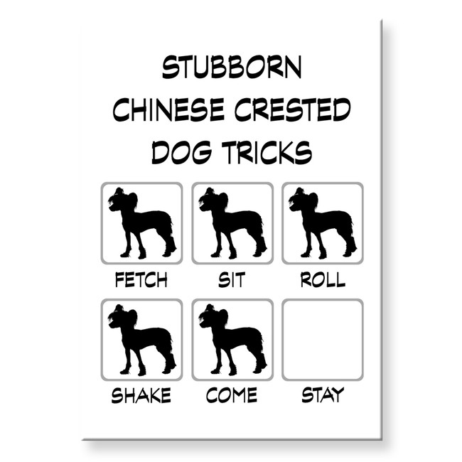 Chinese Crested Dog Stubborn Tricks Fridge Magnet