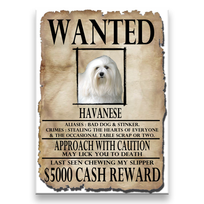 Havanese Wanted Poster Fridge Magnet No 1