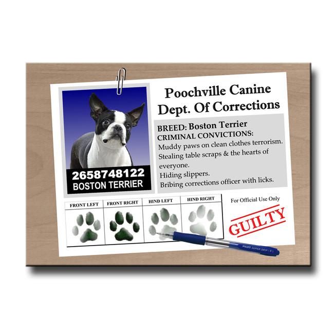 Boston Terrier Rap Sheet Fridge Magnet