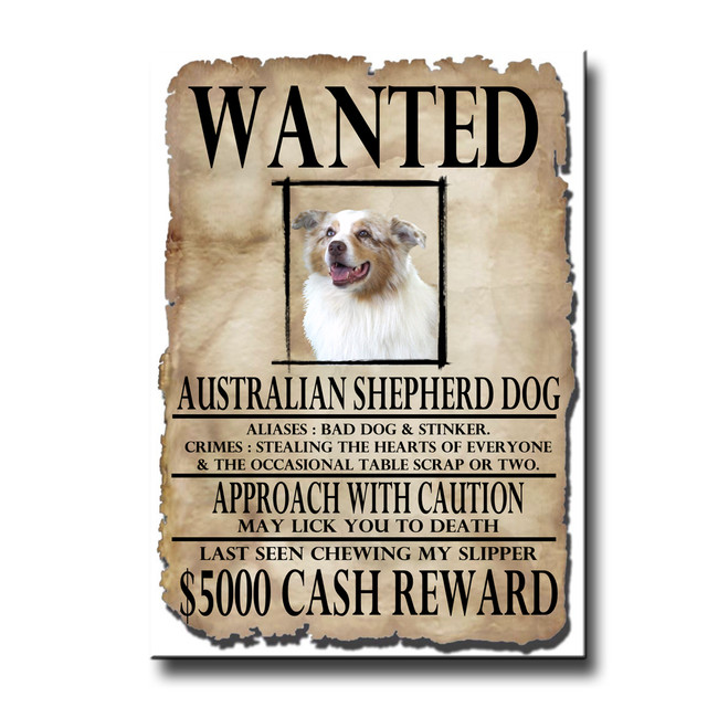 Australian Shepherd Dog Wanted Poster Fridge Magnet