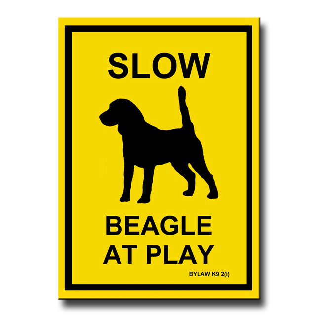 Beagle Slow at Play Fridge Magnet