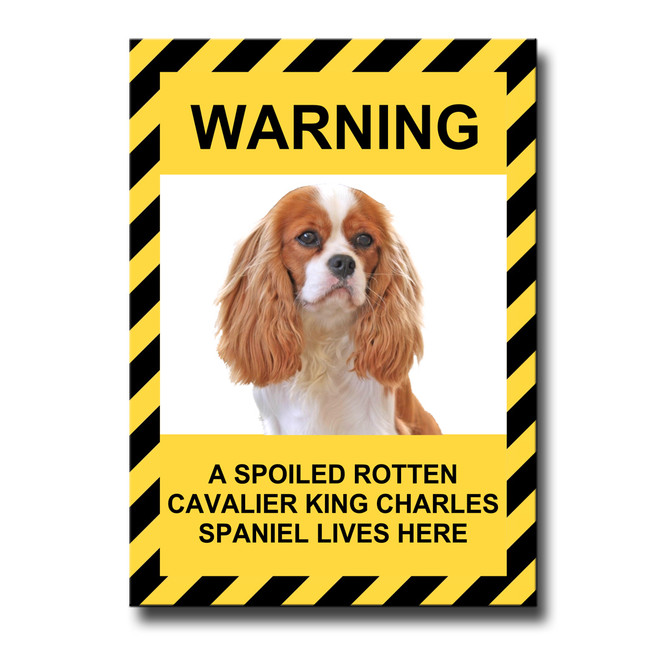 Cavalier King Charles Spoiled Rotten Fridge Magnet No 2