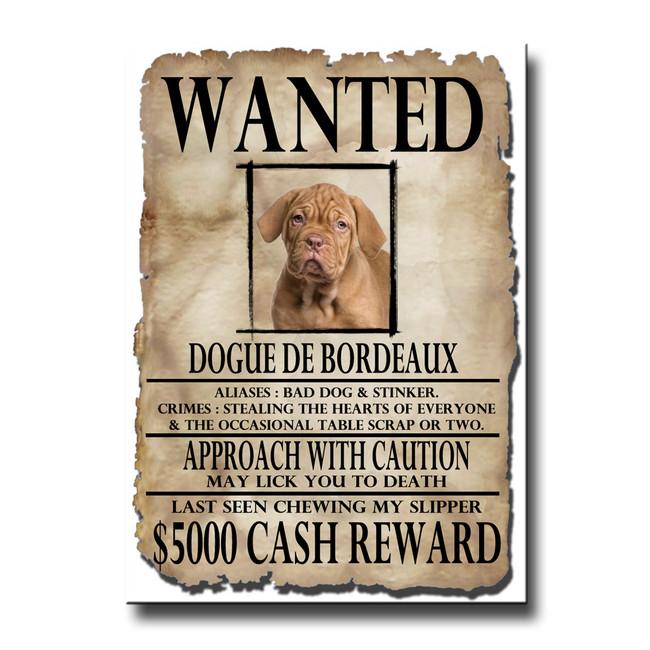 Dogue de Bordeaux Wanted Poster Fridge Magnet