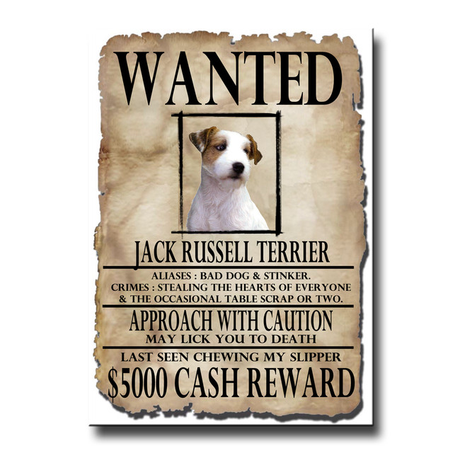 Jack Russell Terrier Wanted Poster Fridge Magnet