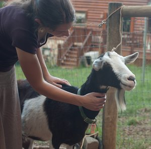 Holly Hock was one of our first and sweetest alpine goats.