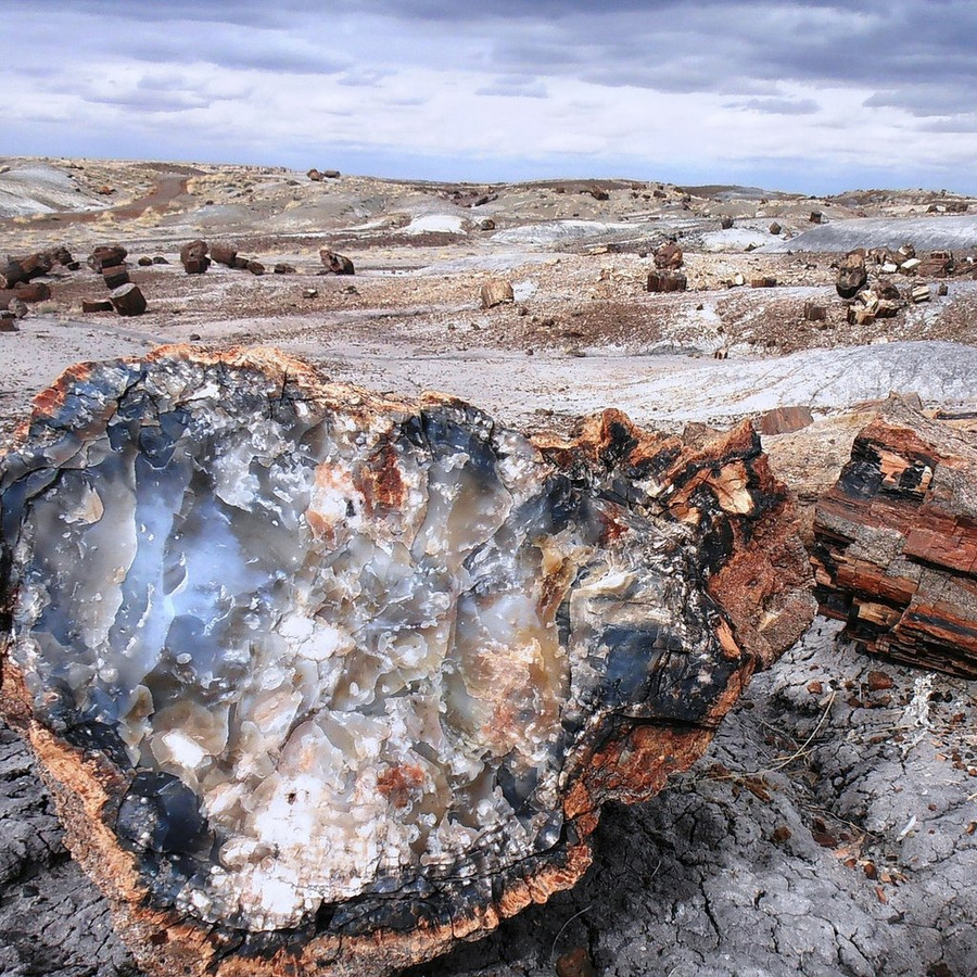 The Arizona petrified forest
