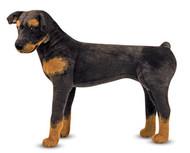 Rex the Rottweiler