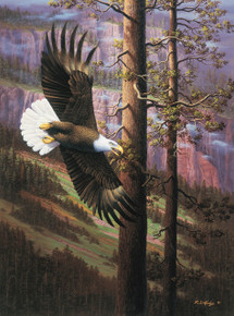 Master of Freedom by R. W. Hedge