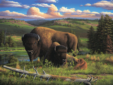 Buffalo Wildlife Canvas Art Prints | Buffalo Nation by R W Hedge