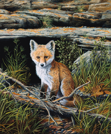 Young Fox Canvas Giclee Art Prints | R. W. Hedge Anticipation