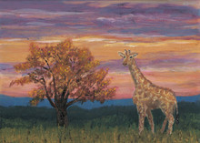 Giraffe At Dusk by Jon Ciarletta