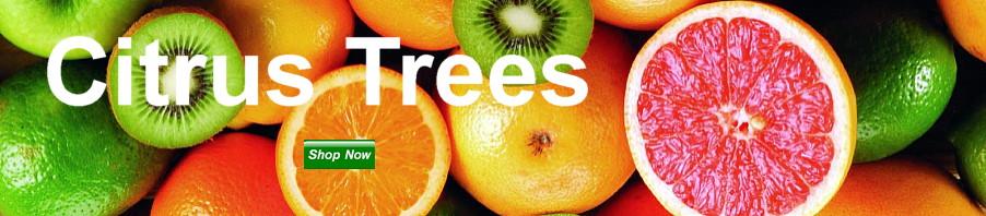 Citrus Trees. Shop Now.