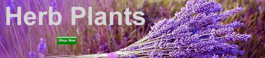 Herb Plants Shop Now