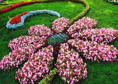 Perennial Grab Bag - 10 Perennials
