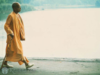 "Srila Prabhupada Photo, Morning Walk, 11""x14"""
